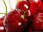 Germersdorfi (szabadgyökeres cseresznye oltvány)